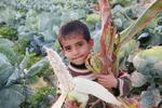 9/10(土)プチ・イベント「パレスチナの農業事情と