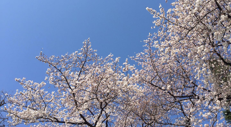 spring image.jpg